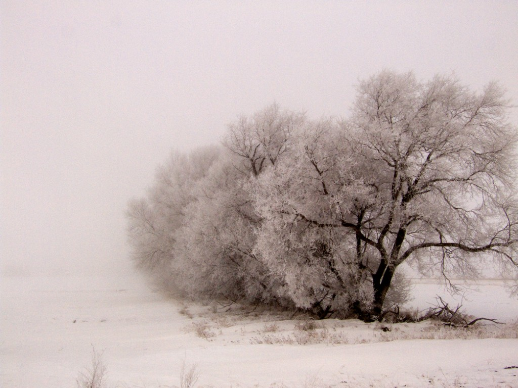 "Photo ""Stark"" by Daniel Luby is courtesy of http://news.dphotographer.co.uk/"
