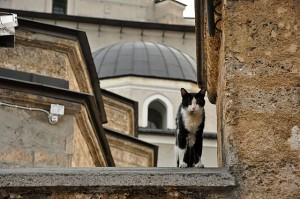 Cat outside Gazi Husrev-Bey Mosque, Turkey. Photo by Jennifer Boyer via Creative Commons