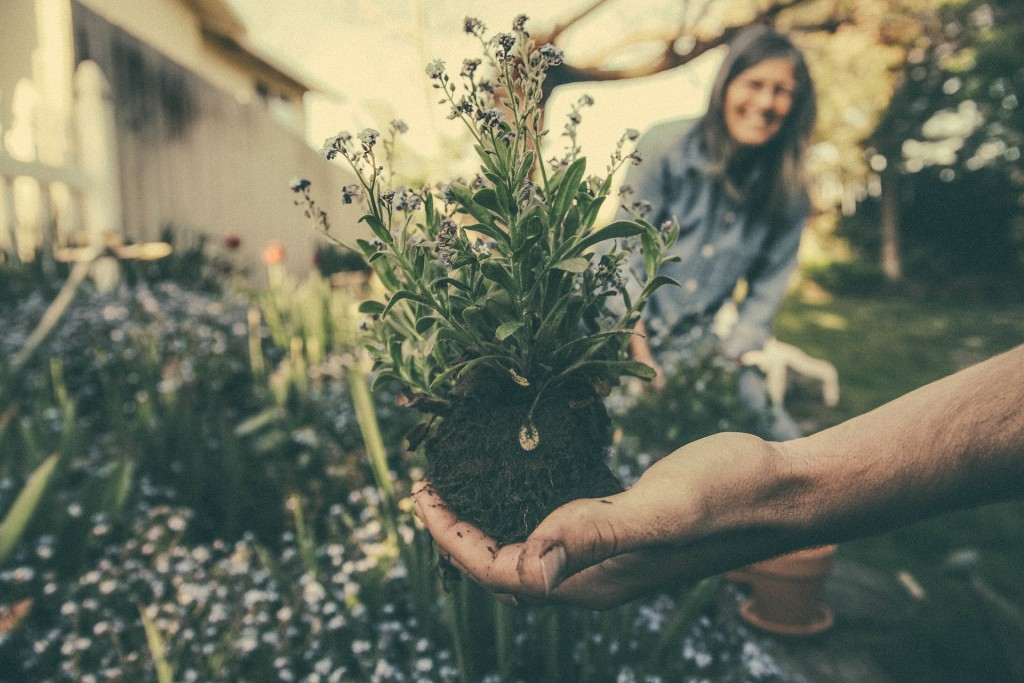 Planting | Photo Credit: Unsplash from Pixelbay