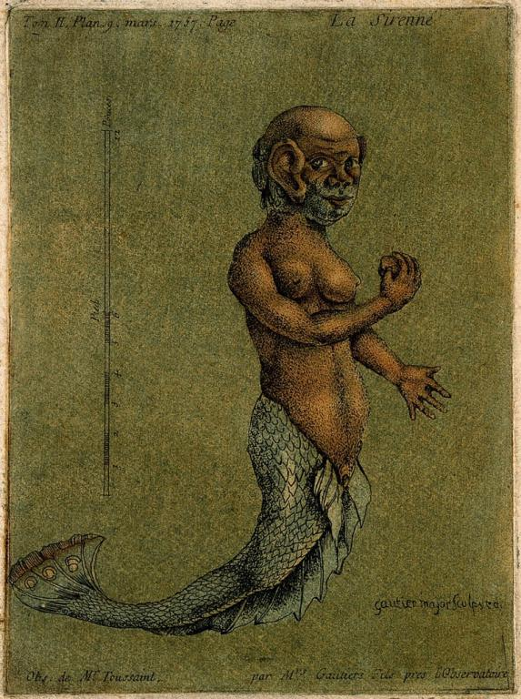 Mermaids are male and female.