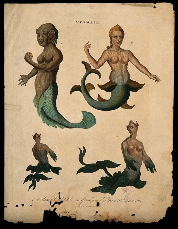 Mermaids are not human.