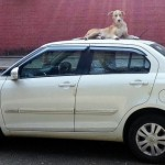 Dog on car 2
