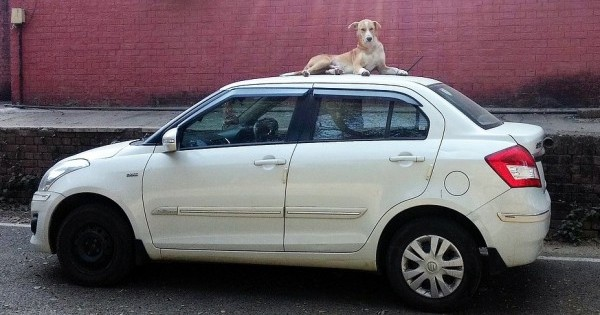 The dog caught the car. Now what do I do with it? In their reckless rush to pass Ryancare/Trumpcare, the GOP is fortunately sealing the AHCA's doom.