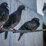 Cell regenation clinic scammer hunger for pidgeons