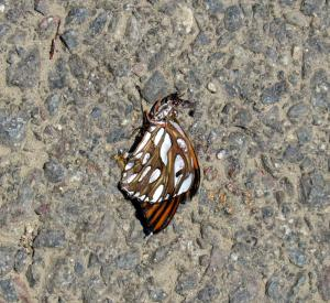 Okay, this beautiful dead butterfly might not be so lucky. Via Keith Onstad.