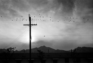 birds on wire ansel adams public domain