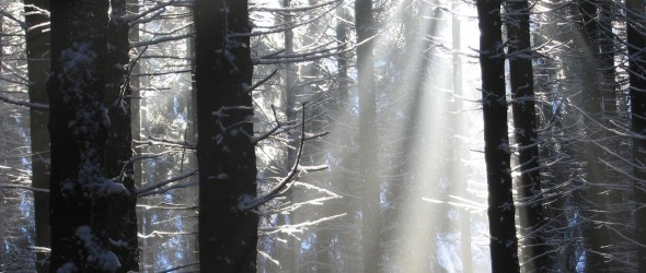 light beams through a winter forest