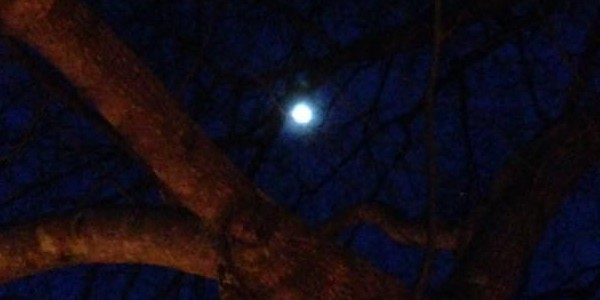 The Full Moon shined down through the barely budding branches of the Guardian Tree above our Ostara Rites, 2016