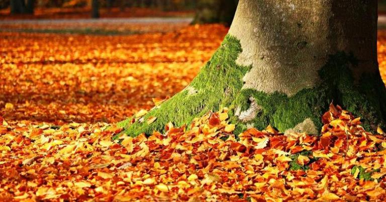 Autumn's Holy Mess