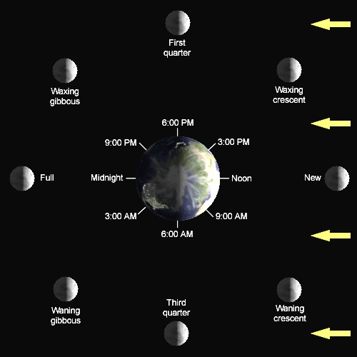 Diagram of the Lunar Phases