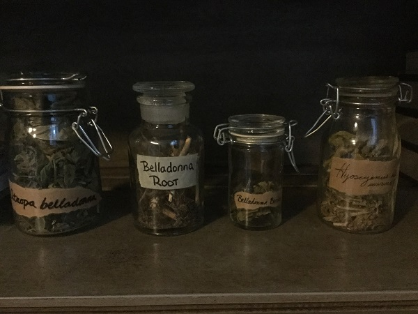 Some of my traditional witch's herbs. Grown and harvested by me.