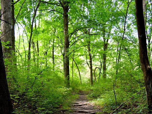 Forest Walk. Photo by Carey E Ward.