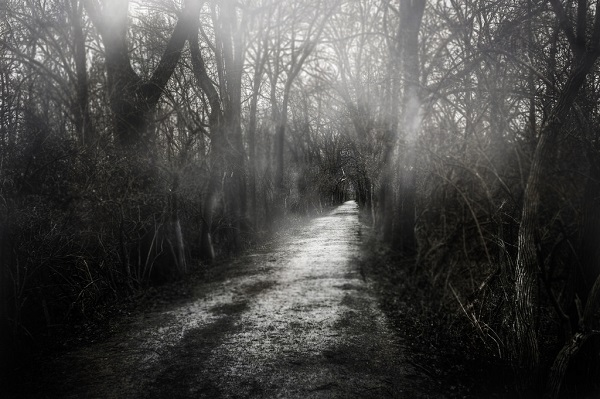 A Dark Path. Bob Dilworth. Flickr Free License Image.