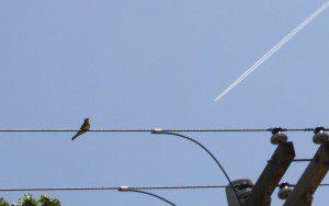 fly-catcher-rocket-21