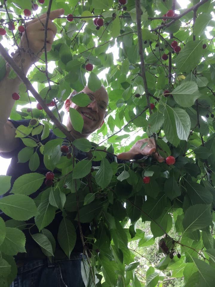 Cherry picking 2017-06-17 18.39.15