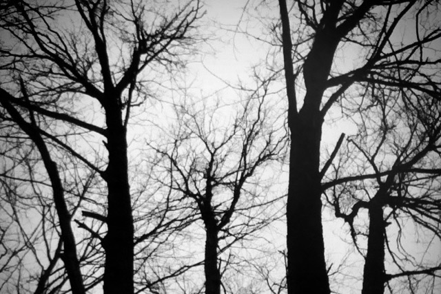 A black and white image of trees bare of leaves in the fall, branches reaching to the sky.