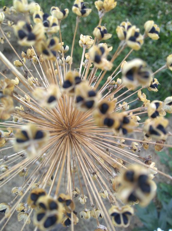 While it appears to be an explosion, it is a close up of a green onion going to seed, with radiating tan lines with black seeds at the tips of the star pattern.