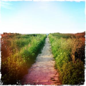 a straight sand path bordered by hazy greenery that stretches off to a distant sky
