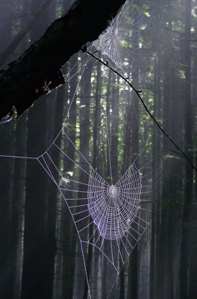 a damp and heavy spiderweb hanging in the green wood.