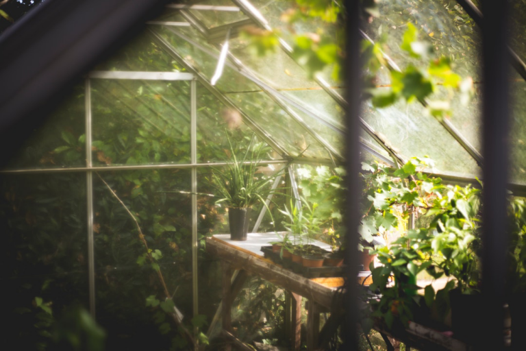 Looking through a pane of glass into a greenhouse filled with a gentle light. A potting bench shows young plants on a tray and many green things growing.