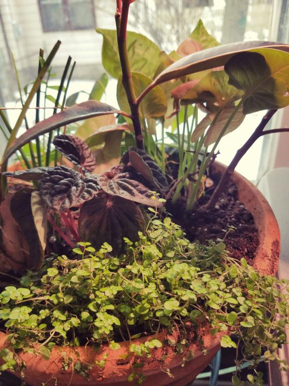 A pot of many plants full of texture and color, all green and pink and burgundy.