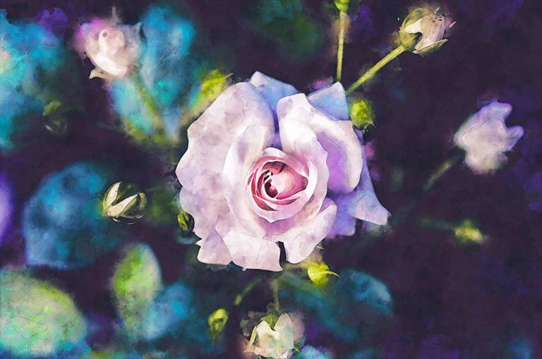 Plant Spirit work can take many forms, I've worked with particular rose bushes for years. This show a digital watercolor of a pale pink rose starting to open with a number of buds about to burst.