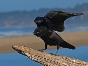 bird-414104_640