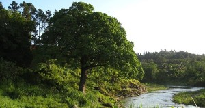 Tree by River Water