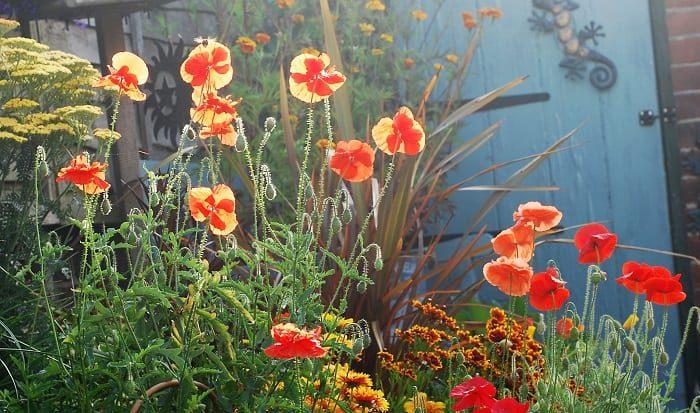 rachel patterson, kitchen witch, garden magic