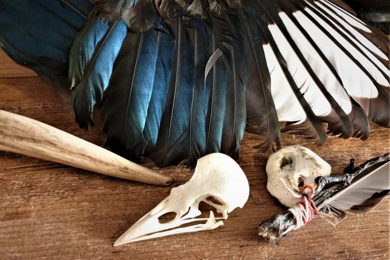 animal magic, animal spirit guide, rachel patterson, kitchen witch