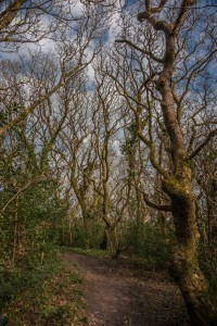 Bishops Wood by Gaia Woolf-Nightingall used with permission