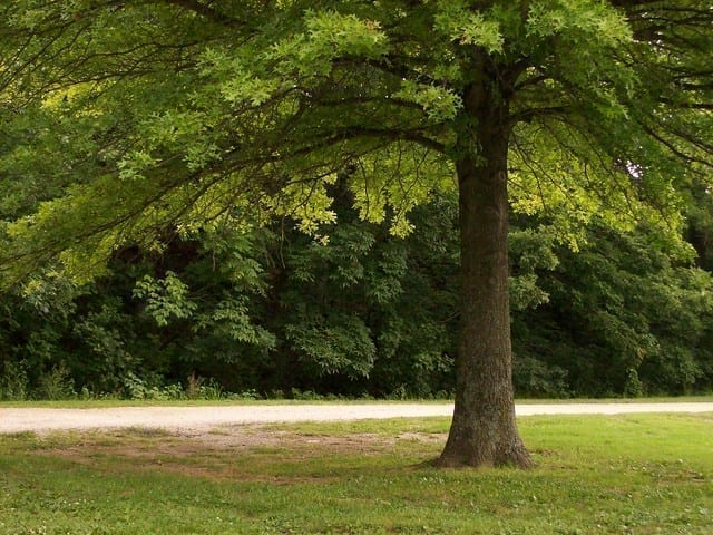 Monastic Strategies: In the Shade of Trees We Did Not Plant