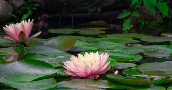 New Lotus