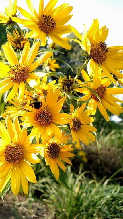 bumble bee and flowers