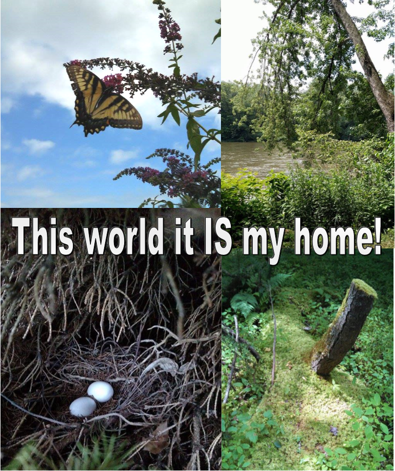 """This world it is my home!"" Photo collage by Leah D. Schade"