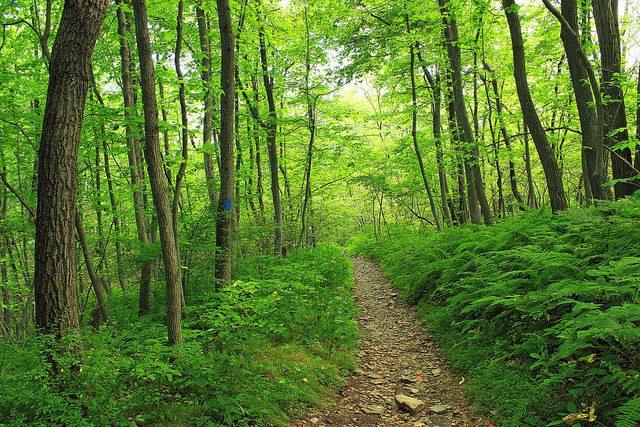 Mountain trail, Pennsylvania