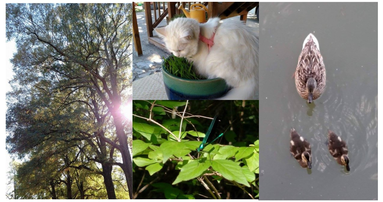 Brother Tree, Sister Cat, Sister Dragonfly, Brother and Sister Ducks. Photos by Leah D. Schade. All rights reserved.