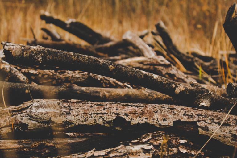 Logs on grass