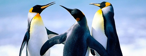 cropped-penguins11