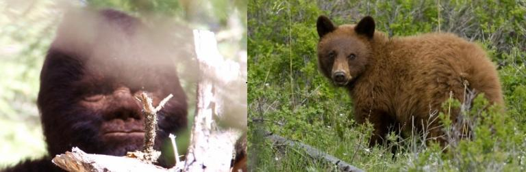 """Left, """"The Standing Blinking Bigfoot Capture"""" (Source Todd Standing). Right, American Black Bear in a cinnamon color."""