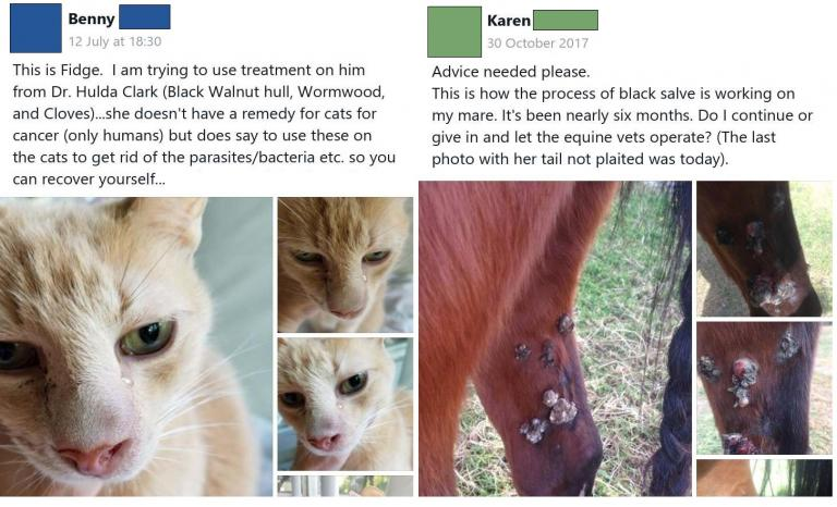 """These People Are Killing Their Pets with """"Black Salve"""" Fake Cancer"""