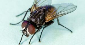 Ten billion flies can't be wrong!