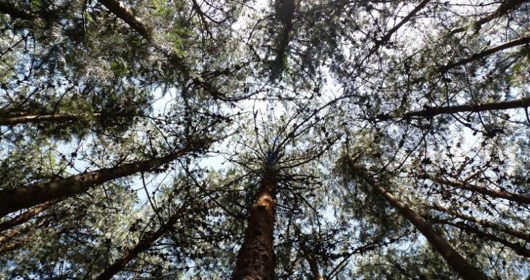 pine trees goddess hel hela norse underworld heathen meeting
