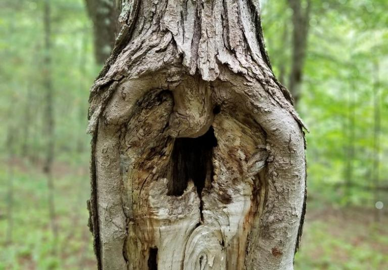see face trees leaves nature random scenery pagan witch ability pareidolia