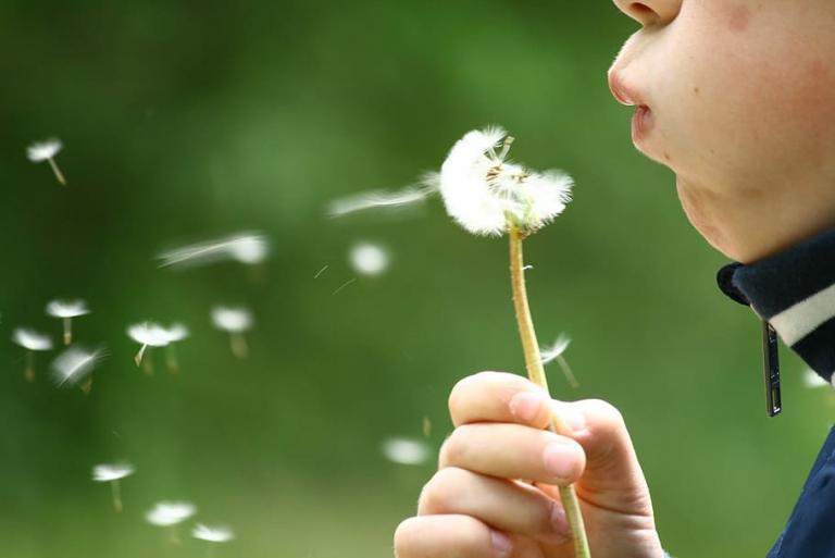 blow dandelion make wish witchcraft kiddie witchcraft