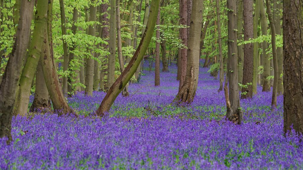 Wikimedia Commons Bluebells pagan love story hades persephone pagan greek gods love story springtime can wait