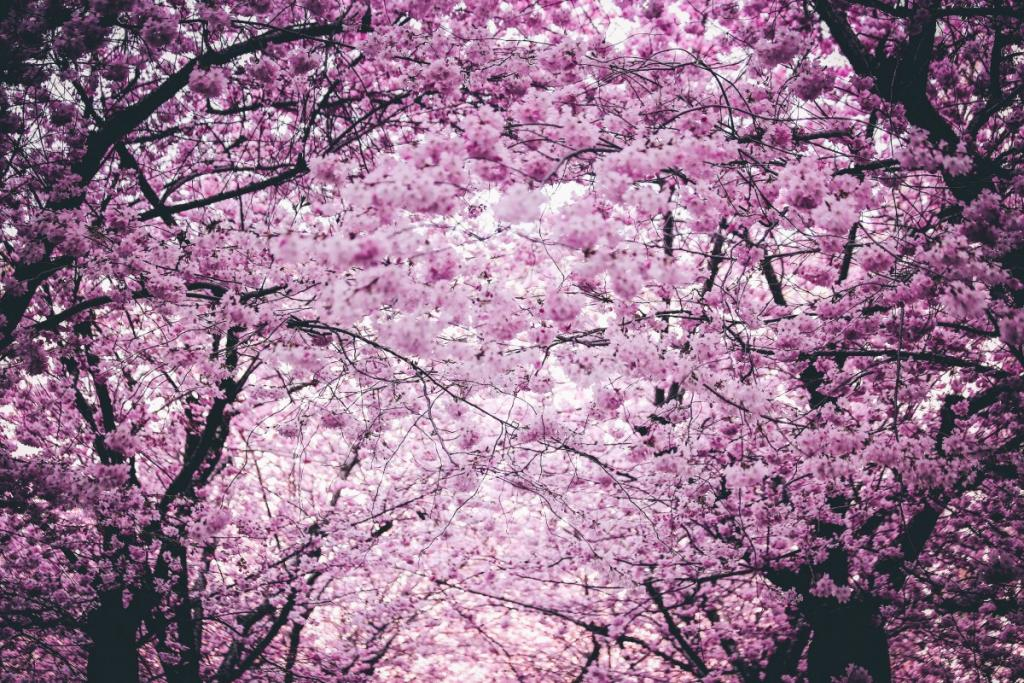 cherry blossoms persephone returns springtime pagan hades springtime can wait a love story