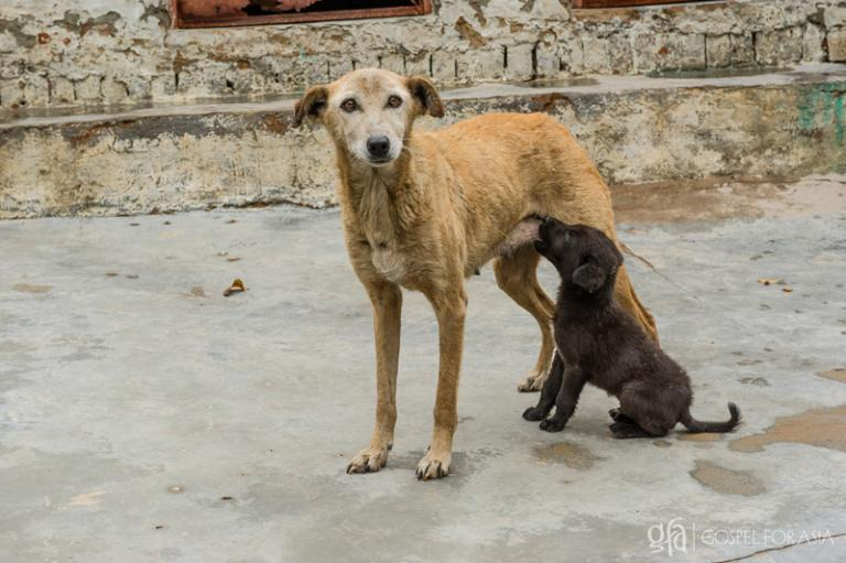 This Dog Is His Mother - KP Yohannan - Gospel for Asia