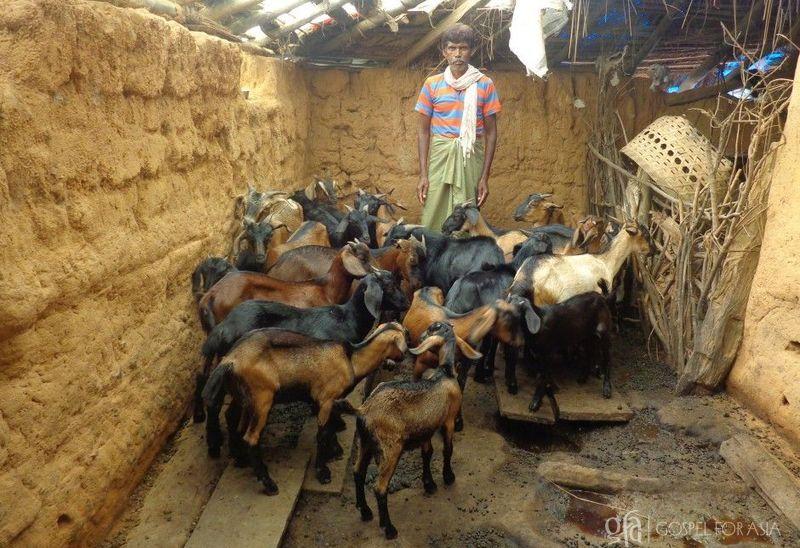 raising goats - KP Yohannan - Gospel for Asia