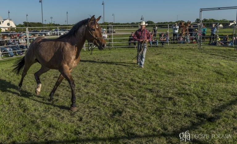 unbroken and fearful horse - KP Yohannan - Gospel for Asia